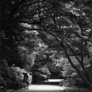 Two Women On The Road In Shinjuku Gyoen Park @ Tokyo