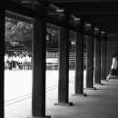 Wooden Pillars In Meiji Jingu @ Tokyo