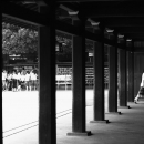 Wooden Pillars In Meiji Jingu