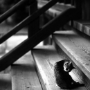 Cat Relaxing On The Staircase Of A Temple