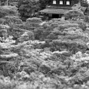 Ginkaku-ji In The Woods @ Kyoto