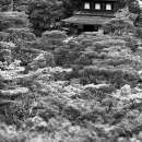 Ginkaku-Ji In The Woods