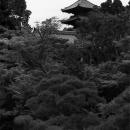 Pagoda In Ninna-ji @ Kyoto