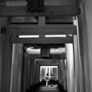 Couple Walking Through The Torii