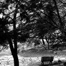 木立の中の誰もいないベンチ