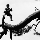 Boy On The Top Of A Tree