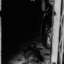 暗闇から這い出てきた犬