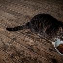 猫のランチ