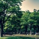 Park Has An Abundance Of Lush Vegetation