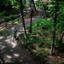 林試の森公園の道