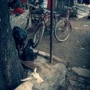 道端にいた白い山羊と黒い山羊
