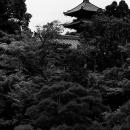 仁和寺の五重塔