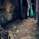 Puppy In The Lane
