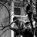 木の上に三人の男の子