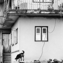 Woman On Veranda And Dog On Roof