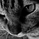 Evil Eyes Of A Pet Cat