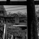 鎮西大社諏訪神社の鳥居