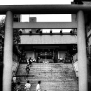 Stairway, Torii And Shinto Priest