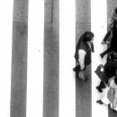 Vertical Stripes And Pedestrians