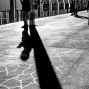 Shadows On Platform