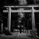 Torii Stood In The Dimness