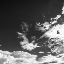 雲の中に鳥のシルエット