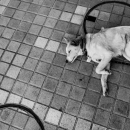 三つの円と昼寝する犬