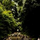 木々が生い茂った参道のカップル