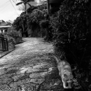 Cat Running The Slope In Shuri