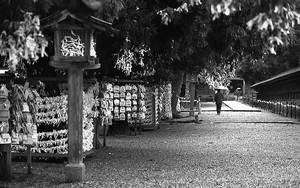 Umbrella In Izumo Taisha