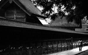 Woman Walking Beside The Main Hall Of Izumo Taisha