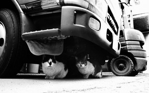 Cats Under The Truck