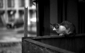 Cat On The Thin Fence