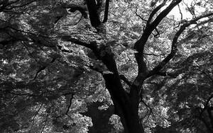 木の葉はキラキラとしていた