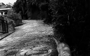 首里金城町石畳道にいた猫