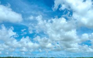 サトウキビ畑に雲
