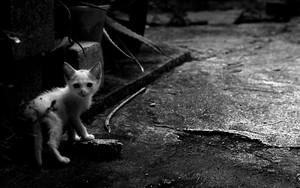 Kitten Looked Back In Dim Corners