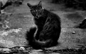 Cat And Manhole