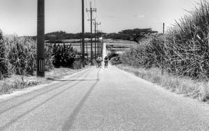 小浜島のシュガー・ロード