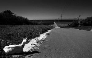 一本道の脇に山羊