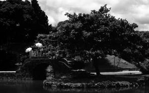 石橋を渡る三つの傘