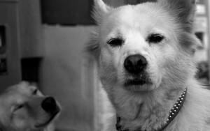 きょとんとした犬の顔