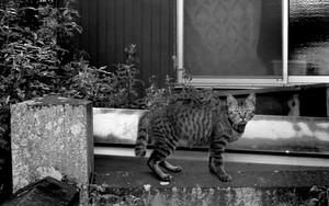 Cat Casting A Sharp Glance