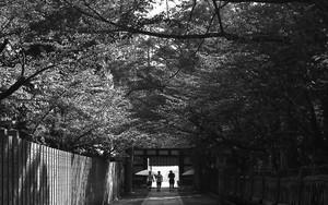 参道に三人の人影