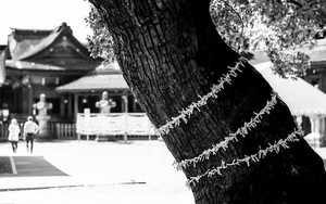 Tree And Many Fortune Slips