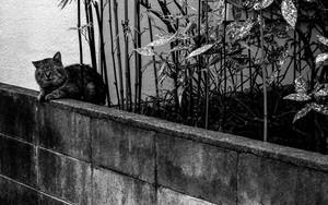 フェンスに寄り掛かる太々しい猫