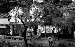 倉敷川沿いの樹下で休む男