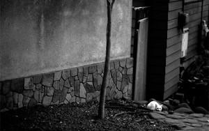 道端に潜む白い猫