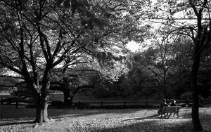 Couple On The Bench In Shinjuku Gyoen Park