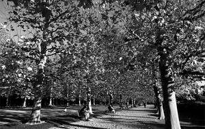 Benches In The Colonnade Of Plane Trees
